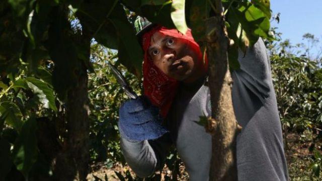 En el pasado la economía de Costa Rica tenía un alto militante agrícola.