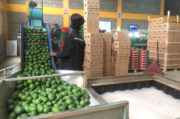 Workers sort avocados at Saipei Foods in Nairobi