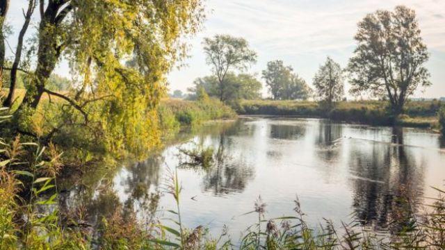 Foto de um lago rodeado por árvores durante o dia