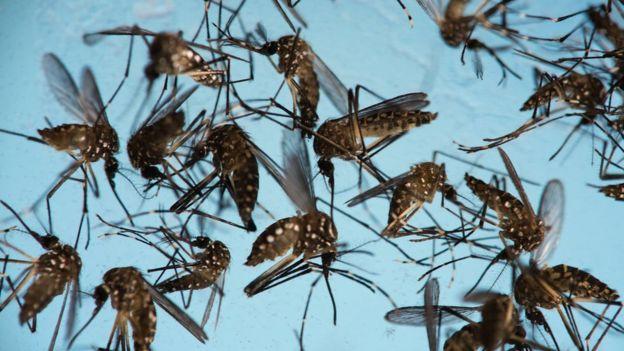علماء يكتشفون نحو 1500 فيروس جديد Bbc News Arabic
