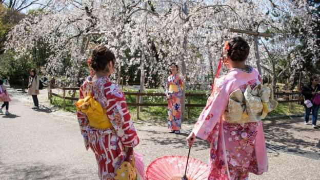 Woman in kimono takes photos under a cherry blossom trees in full bloom during Hanami or cherry blossom season in Maruyama park, Kyoto prefecture, Japan.