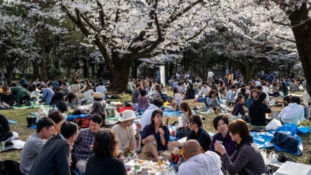 En contraste con lo que está ocurriendo en otros lugares del mundo por el coronavirus, los japoneses no han dejado de reunirse para admirar a sus cerezos en flor.