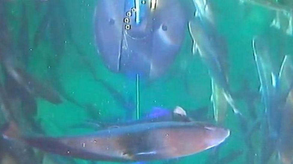 Stingray underwater laser in action