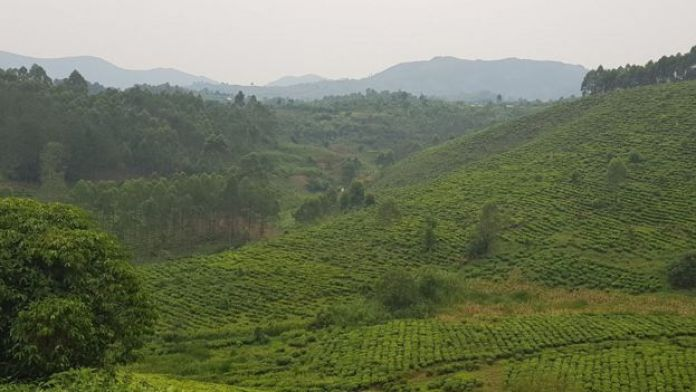 Green valley in Kanungu