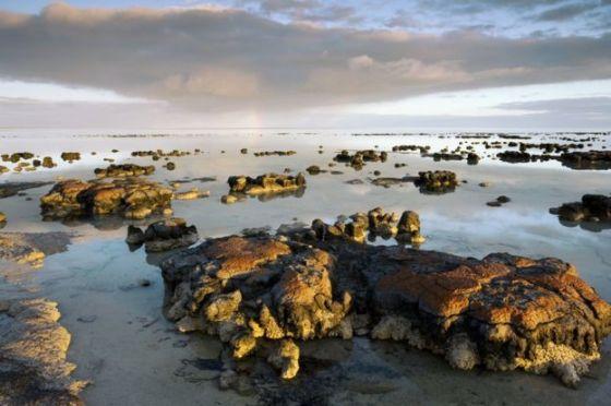 Stromatolites, Shark Bay