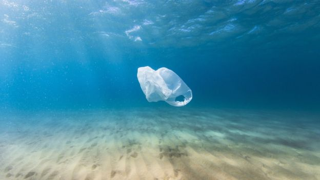 Baleia morre após ingerir 40kg de materiais plásticos 3
