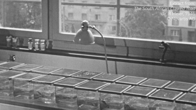 Un laboratorio lleno de frascos con ranas utilizadas para pruebas de embarazo