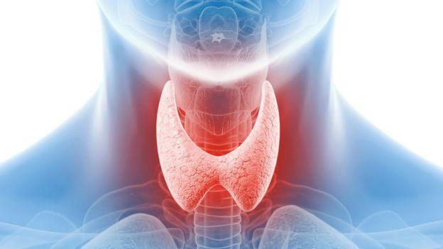 Ilustración de la glándula tiroides