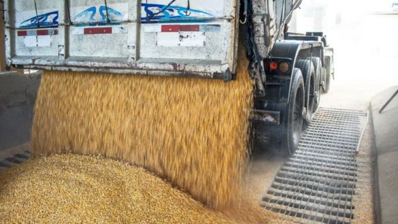 Caminhão descarrega grãos