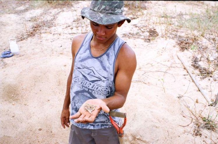 Homem segura sapo da espécie Proceratophrys cristiceps logo após ser retirado do seu local de estivação