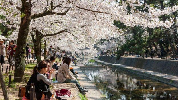 """يتبادل اليابانيون عبارة """"سومي ماسين"""" مرارا كل يوم تأدبا واحتراما"""