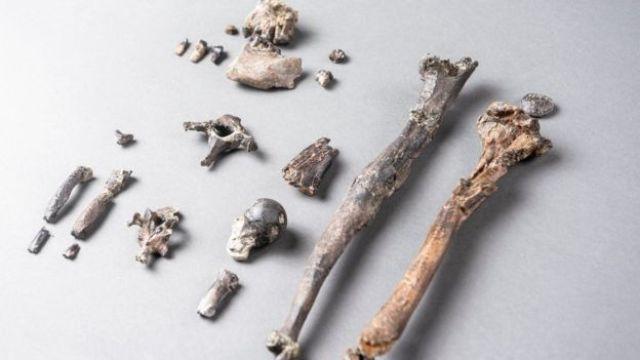 21 ossos de um Danuvius macho