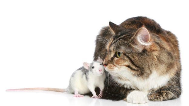 Un ratón y un gato jugando