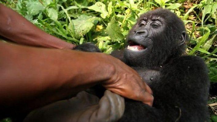 Virunga Ulusal Parkı