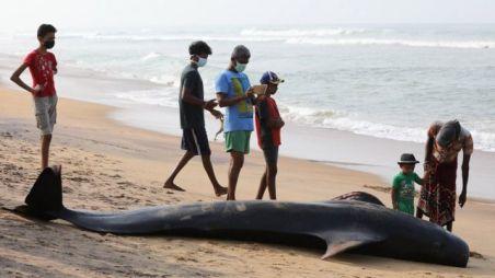 Cerca de cinco pessoasao redor de baleia encalhada na areia