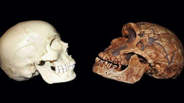 Череп неандертальця і людини