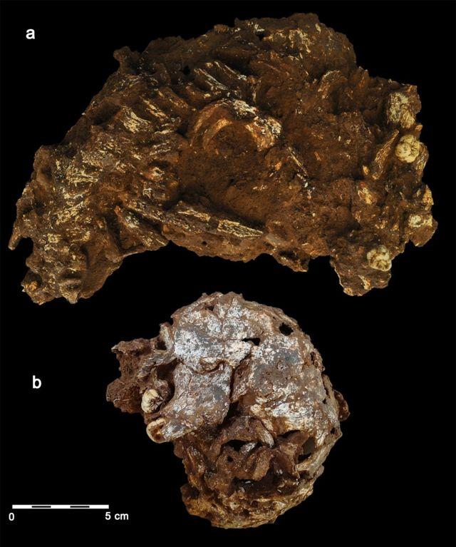 В Африці знайшли найдавнішу могилу дитини. Їй 78 тисяч років