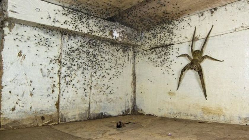 Gil Wizen photo shows giant spider in bedroom