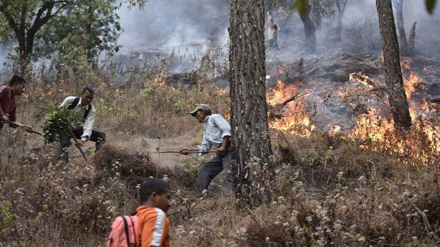 国家灾难反应部队人员在北阿坎德邦地区扑灭森林大火