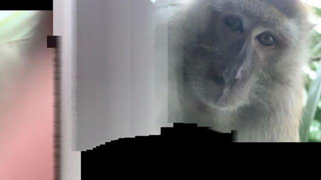 잃어버린 스마트폰에서 발견된 원숭이 사진