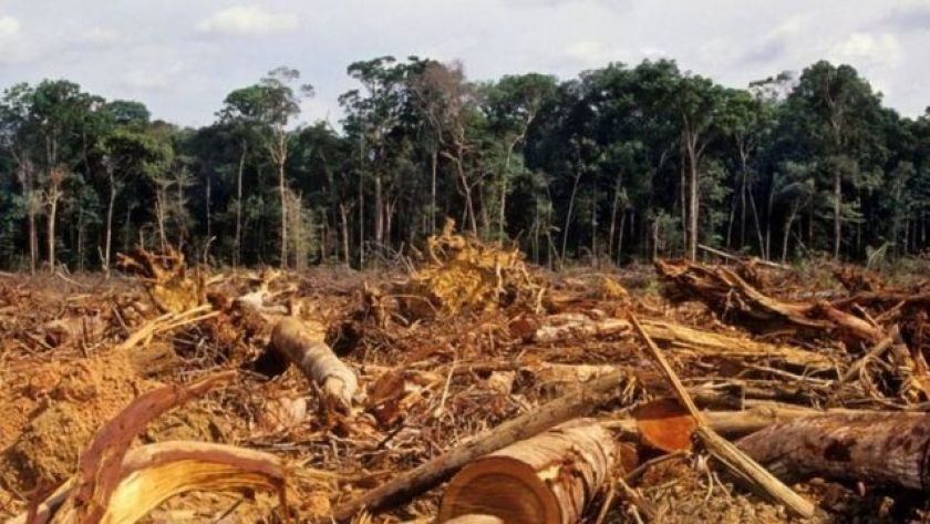 Deforested lot in the Amazon