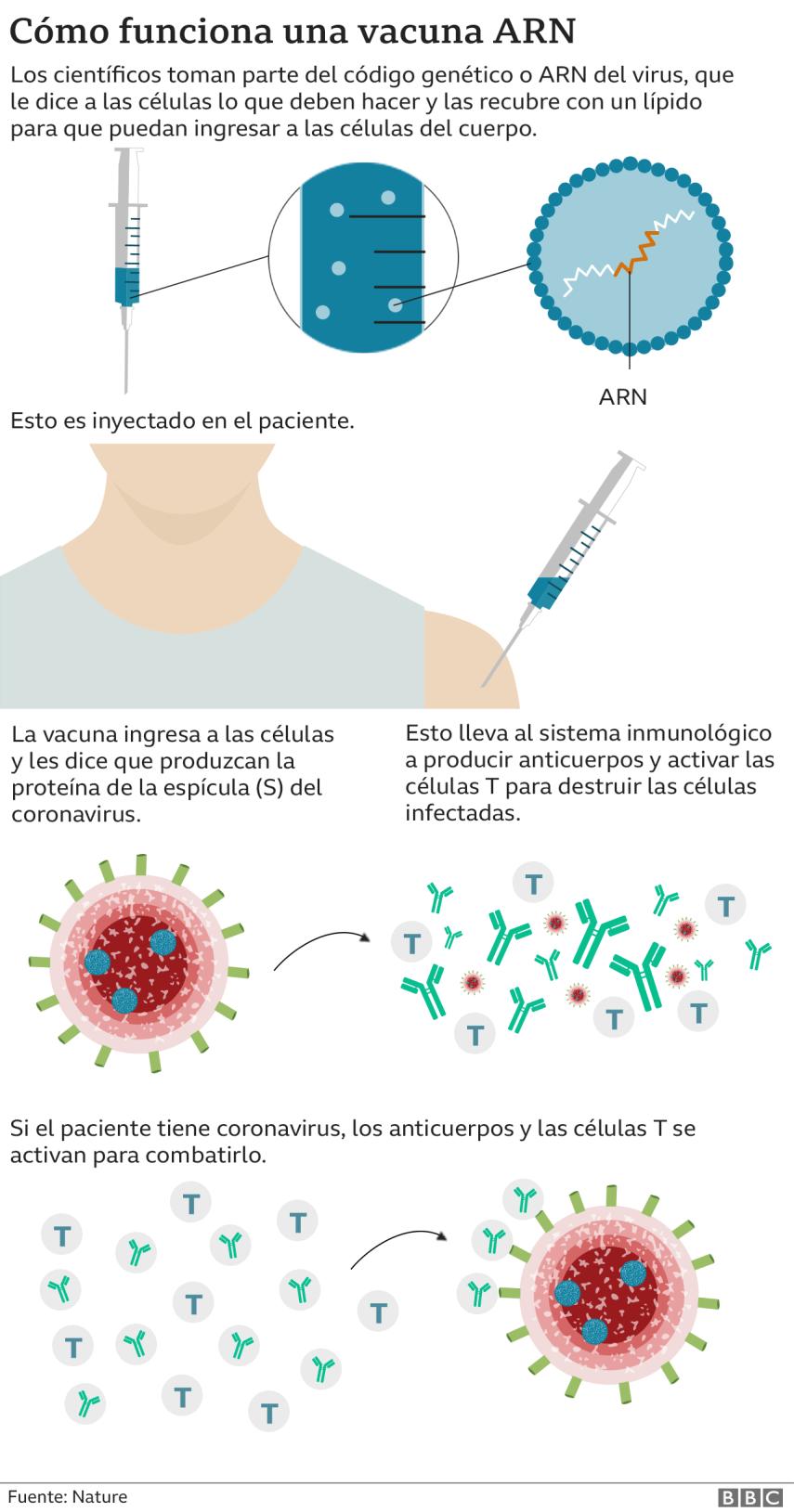 Gráfico sobre la vacuna.