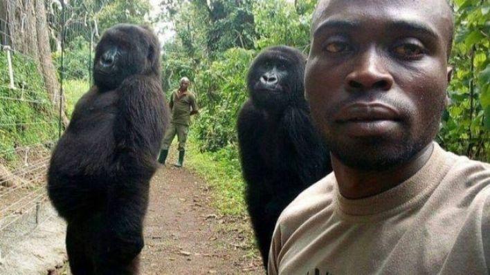 İki dişi gorilin muhafızları taklit ediyor göründükleri fotoğraf viral olmuştu