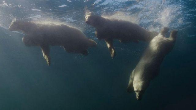 나첨은 북극곰이 자기가 있는 쪽으로 내려오자 매우 놀랐다고 했다