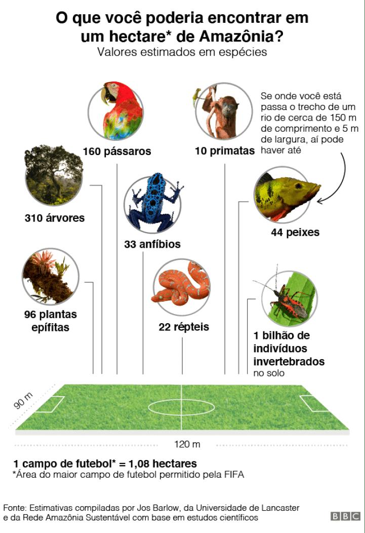 gráfico do que é possível encontrar em um campo de futebol