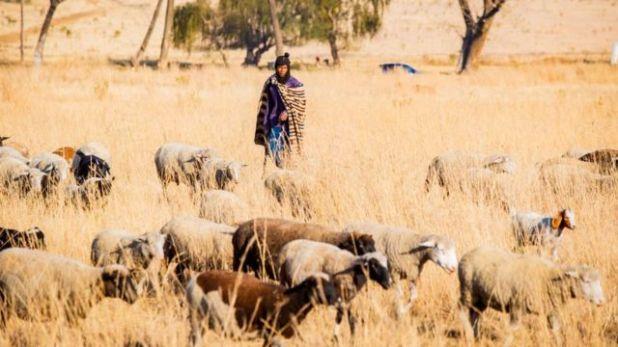 الزراعة الريفية في مستوطنة دودوزا العشوائية في دودوزا ، جنوب إفريقيا
