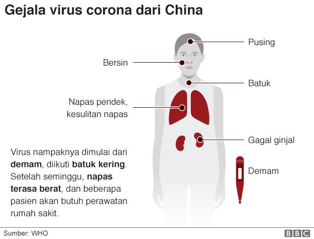 Virus Kelelawar Penyakit Akibat Corona Dianggap Berasal Dari Binatang Ini Masyarakat Diimbau Hindari Bbc News Indonesia