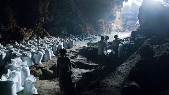 Trabalhadores coletam guano e armazenam em grandes sacos dentro de uma caverna