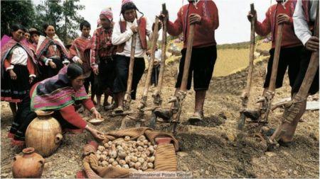 As comunidades indígenas nos Andes ainda mantêm uma forte relação com a batata