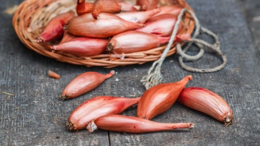 Image result for Persian shallot