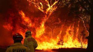 Bombeiros na frente de um incêndio florestal
