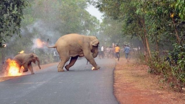 Kaçan filler