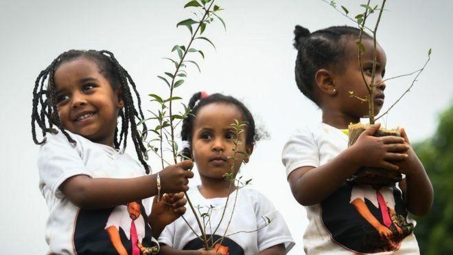 Yeni fidan dikma programları, Etiyopya'da destekleniyor.