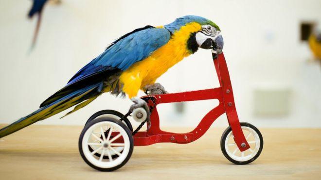Pájaro montando una bicicleta