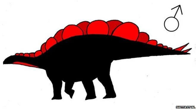 Female Stegosaurus mjosi