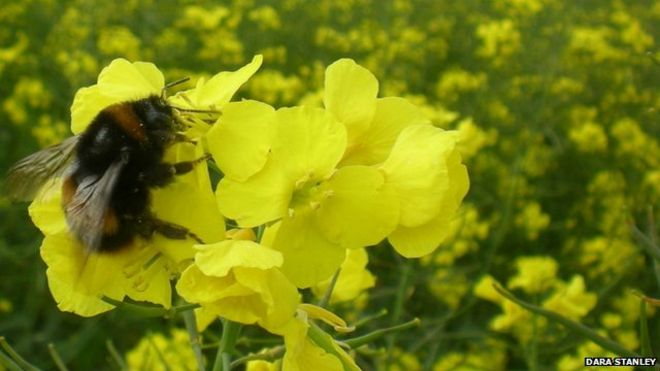 Neonicotinoids target the same mechanisms in the brain affected by nicotine in the human brain