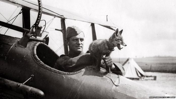 RAF fox mascot with pilot in WW1