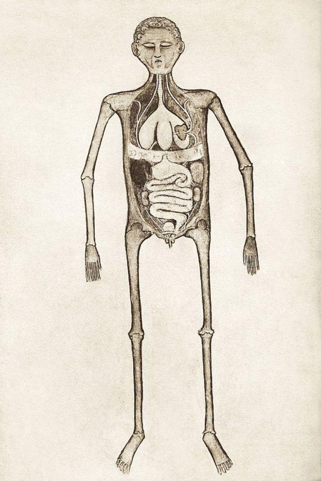 """Ilustración de """"Anathomia"""""""