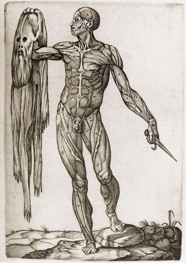 """Ilustración de """"Anatomía del cuerpo humano"""""""