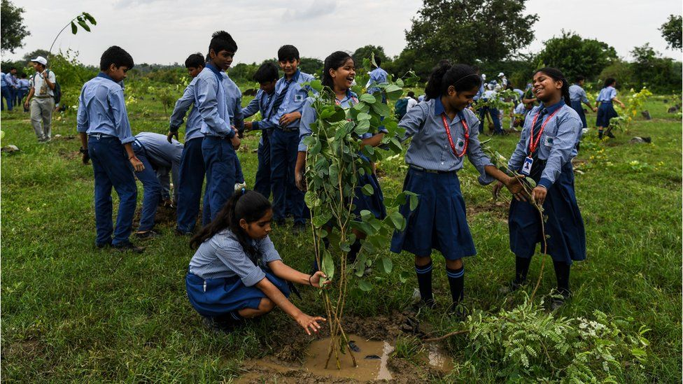 Climate Change What Is Being Done Around The World To Plant Trees Bbc News