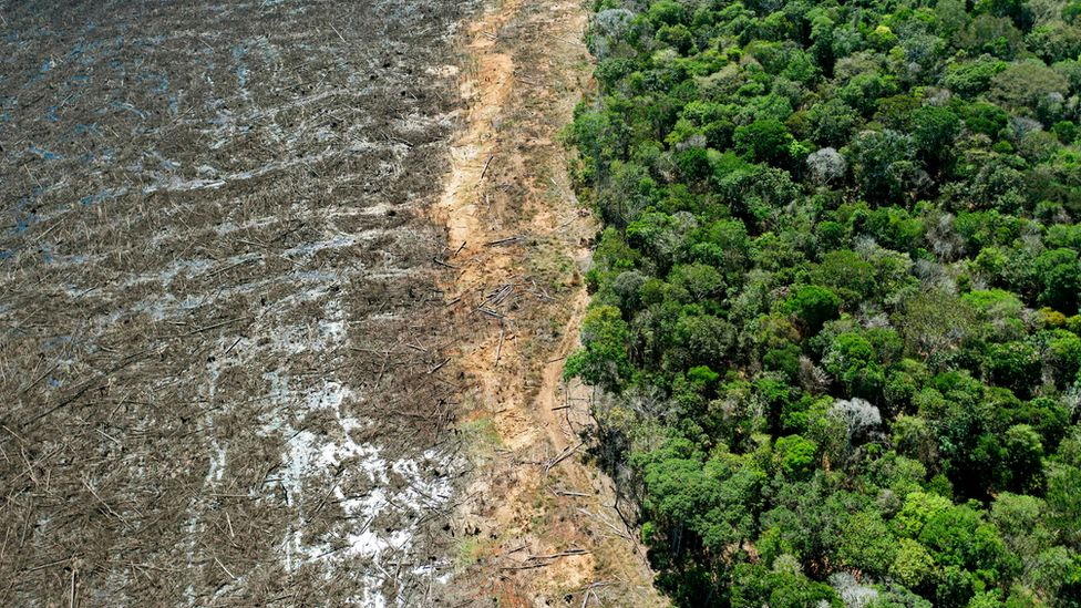 However, biophysical effects of deforestation, which include changes in land surface albedo, evapotranspiration, and cloud cover also affect climate. Climate Change New Uk Law To Curb Deforestation In Supply Chains Bbc News