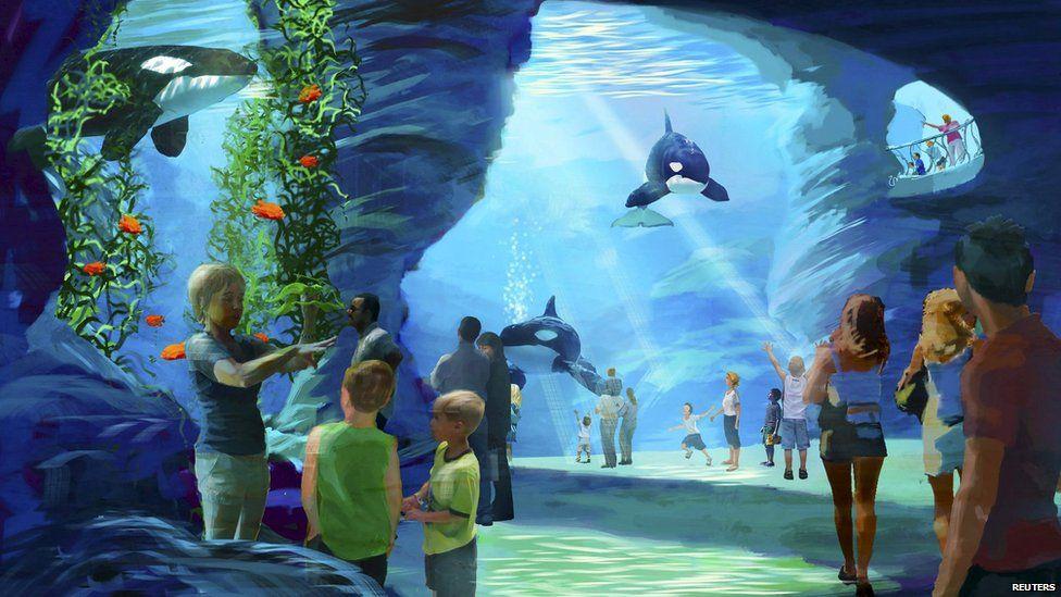 killer whale plans