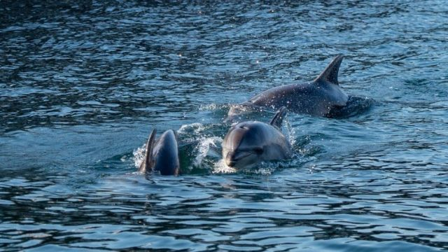Dolphins in Turkey - Pandemic