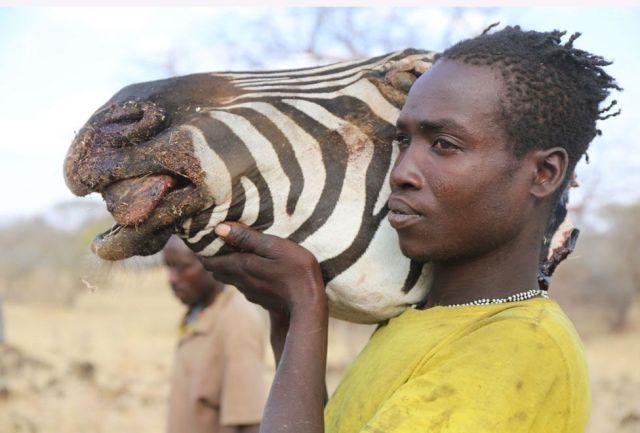 Hazda cargando cabeza de zebra
