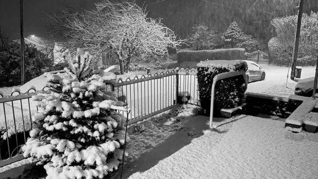 Snowy garden in Swansea