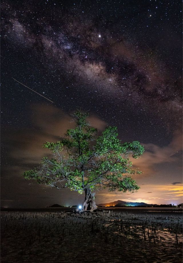 A mangrove tree on a beach with a night sky of stars above in Malaysia